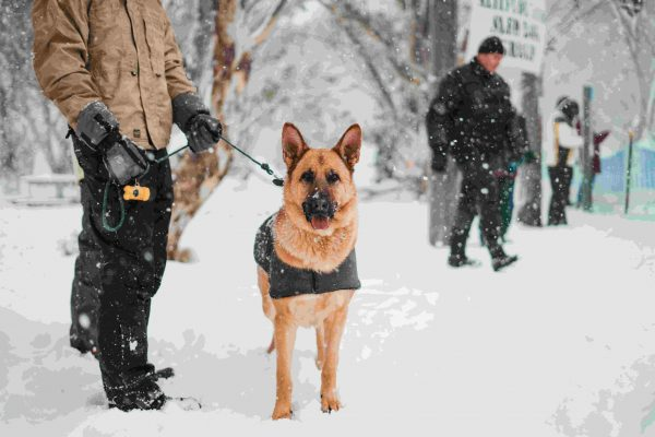 What Are The Benefits of Owning a Protection Dog?